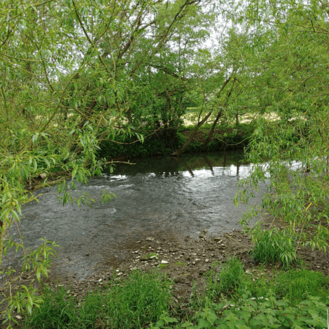 Jack White's, River Frome, Oldford